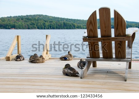 Ducks on the Dock/Duck family spreads out on the dock for an afternoon nap - stock photo