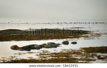 ducks on the St-Lawrence River - stock photo