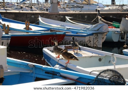 Ducks sit on a boat at the pier