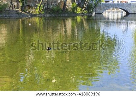 Ducks swimming in the pond in front of Vajdahunyad castle in Budapest - stock photo