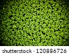 duckweed natural abstract background. - stock photo