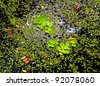 Duckweed natural abstract background - stock photo