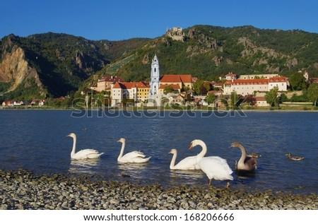 Duernstein with swan  - stock photo