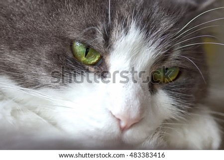 Dull Looking Cat