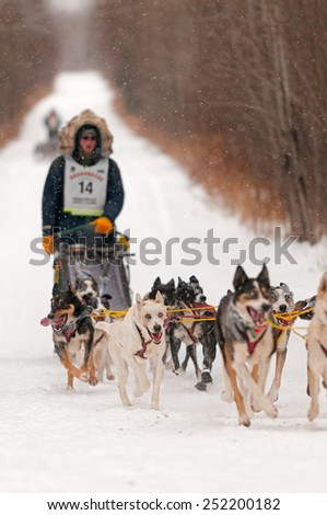 DULUTH MN - JANUARY 27: Ryan Anderson's team races on the trail during the Marathon portion of the John Beargrease Sled Dog Race. Anderson finished 1st on January 27, 2015 in Duluth, MN - stock photo