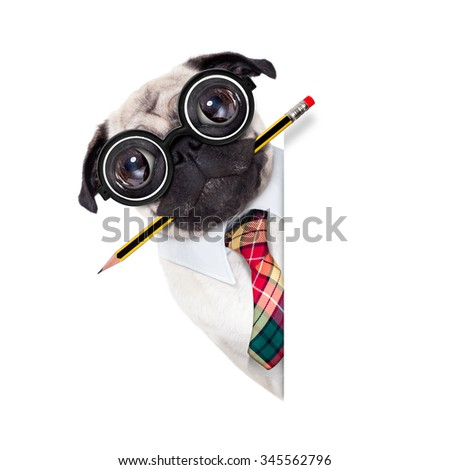 dumb crazy pug dog with nerd glasses as an office business worker with pencil in mouth ,behind empty blank banner or placard,  isolated on white background - stock photo