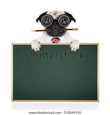 dumb crazy pug dog with nerd glasses as an office business worker with pencil in mouth ,behind empty blank banner and blackboard,  isolated on white background - stock photo