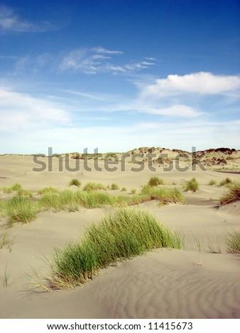 Dune and grass - stock photo