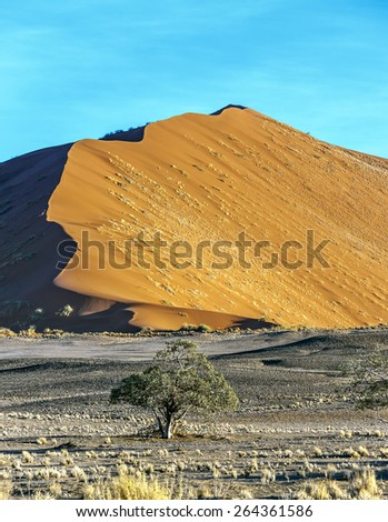 Dune and tree in Sossusvlei plato of Namib Naukluft National Park - Namibia, South Africa - stock photo