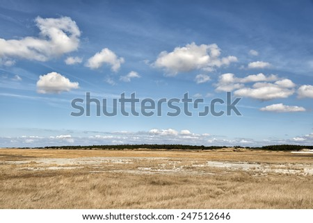 Dune grass in near St. Peter Ording in northern Germany on a sunny day with blue sky