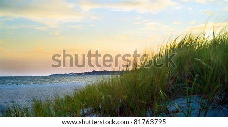 Dune grass on a beach blowing in the wind. - stock photo