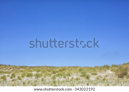 Dune grass on a sunny day with a blue sky  - stock photo