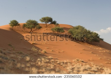 Dune in Namibia