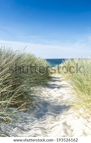 Dune with beach grass close-up. - stock photo