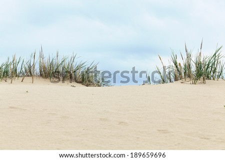 dune with grass - stock photo