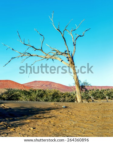 Dunes and lonely tree in Sossusvlei plato of the Namib Naukluft National Park - Namibia, South Africa - stock photo