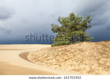 Dunes in Hoge Veluwe National Park in Netherlands, Europe - stock photo