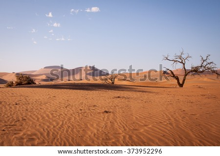 Dunes with dead trees in Namib Desert , Namibia