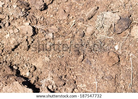 dung on the nature - stock photo