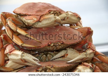 Dungeness crabs stacked for market. They are a popular delicacy, and are the most commercially important crab in the Pacific Northwest, as well as the western states.  - stock photo