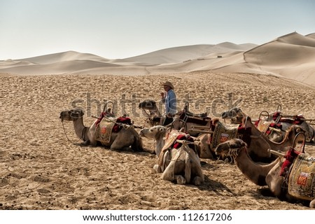 DUNHUANG, CHINA - JUNE 29: Chinese camel driver talkes care of resting Camels at the famous Mingsha sand dunes on June 29, 2012 in Dunhuang located on the historic Silk road in the Gobi desert. - stock photo