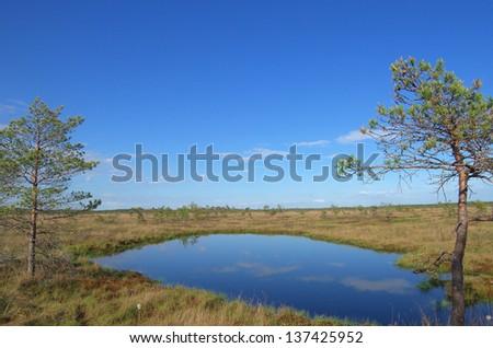 Dunikas swamp near Liepaja (Latvia) - stock photo