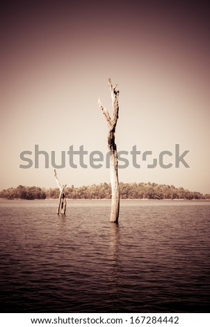 duo tree (conceptual old style) - stock photo