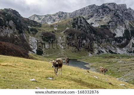 Durmitor, Montenegro - stock photo