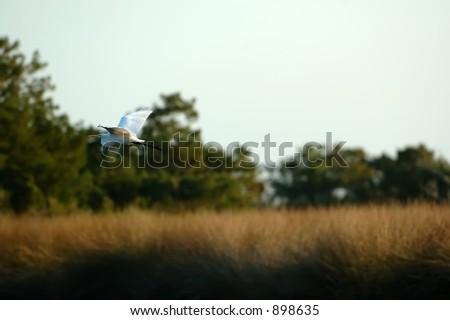 Dusk Flight - stock photo