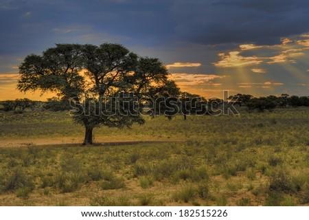 Dusk in the Kalahari desert, Grootkolk, Kgalagadi transfrontier Park, Northern Cape, South Africa, multiple exposure image stack. - stock photo