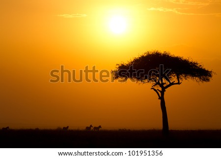Dusk in the Masai Maria National Reserve with Acacia tree and silhouettes of Zebras, Keya, Africa - stock photo