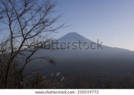 Dusky evening shot of Mount Fuji with branches in foreground - stock photo