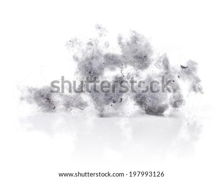 Dust bunnies on white reflecting background. - stock photo