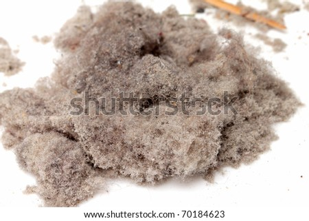 Dust - real - stock photo