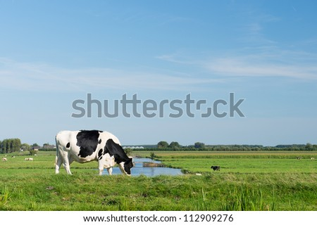 Dutch black and white cow in typical landscape - stock photo