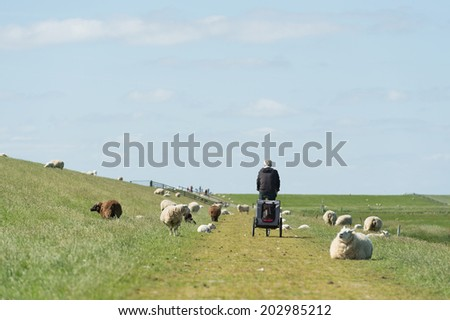 Dutch dike with sheep and man with dog car and bike at the wadden island Terschelling - stock photo