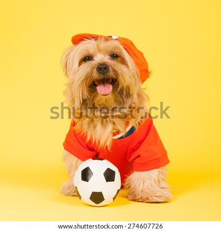 Dutch dog in orange as soccer player - stock photo