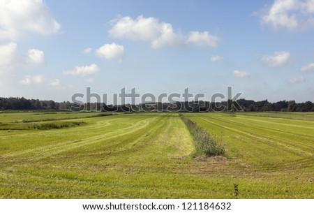 dutch farmland with blue sky - stock photo
