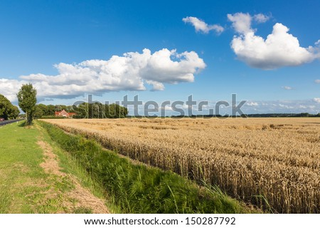 Dutch farmland with wheat field and cloudscape - stock photo