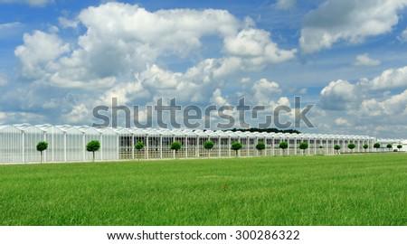 Dutch greenhouse  - stock photo