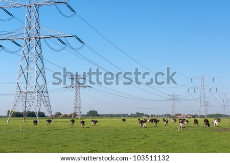 Dutch landscape with grazing cows below the high-voltage cables and between the high-voltage masts. - stock photo