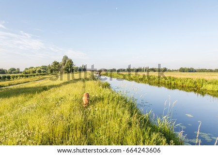 Dutch polder landscape with dikes an channel and a dog in Hazerswoude, in the province of South Holland Netherlands