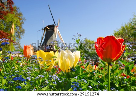 Dutch windmill and colorful tulips and forget-me-not flowers in famous spring garden 'Keukenhof', Holland - stock photo