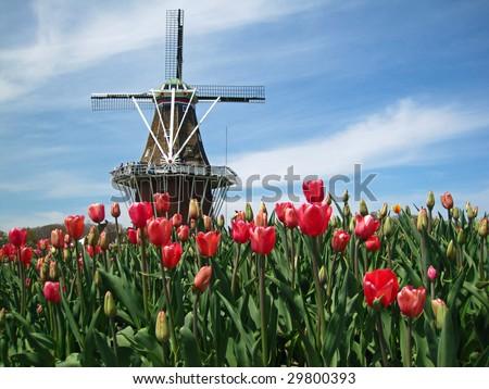 Dutch Windmill Holland Michigan During Tulip Stock Photo - Holland tulip festival