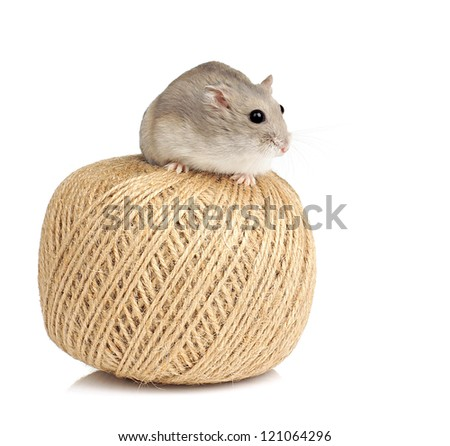 Dwarf Hamster Sitting on Ball of String - stock photo