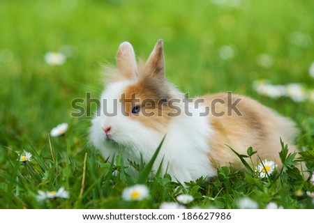 Dwarf rabbit in a spring meadow