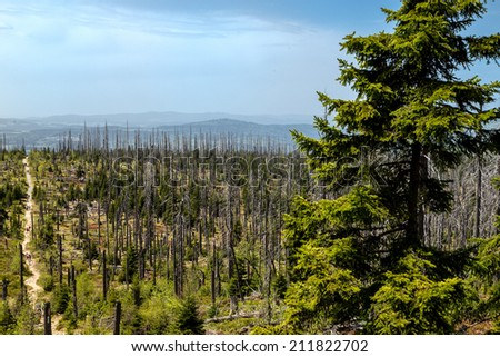 Dying forests in the Bavarian Forest on the Lusen - stock photo