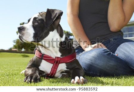 Eager Pit Bull puppy - stock photo