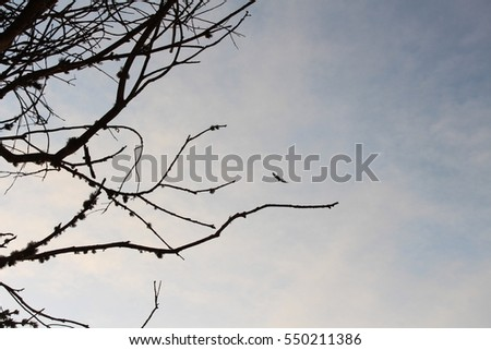 Eagle and Trees