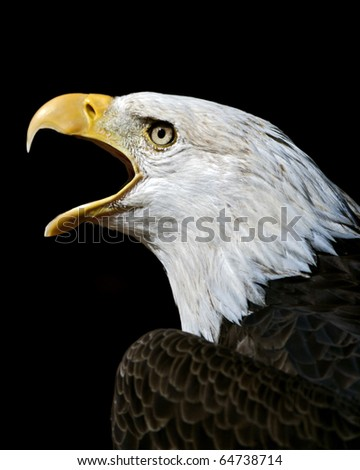 eagle calling on a black background - stock photo